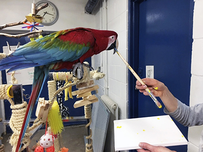 A Green-Winged Macaw perched on a tree stand being handed a paintbrush by a person also holding a canvas