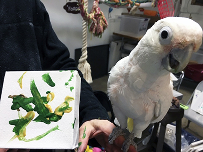 A Goffin's Cockatoo, perched on a hand which is also holding a small, abstract painting featuring green and yellow paint