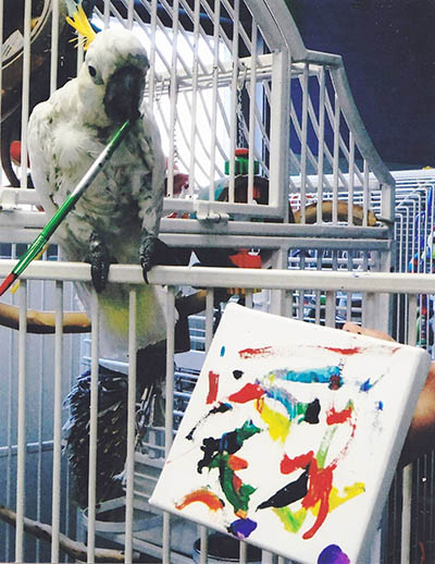 Photo of Bobby, Citron Cockatoo, Creating Painting 2013-01