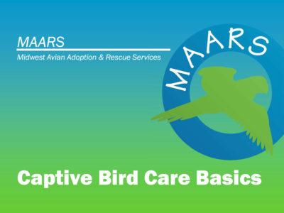 Slide from the MAARS Bird Care Class