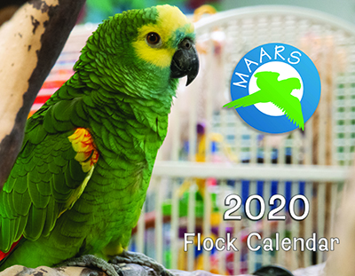 Photo of a Blue-Fronted Amazon on the front of a 2020 calendar