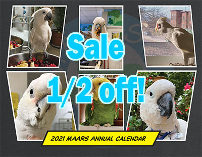 Cover image of the 2021 MAARS flock calendar